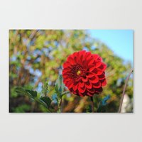 dahlia Canvas Prints featuring Dahlia by Renee Trudell