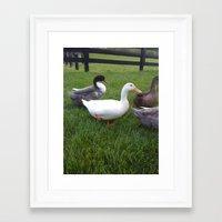 ducks Framed Art Prints featuring Ducks by Yellow Barn Studio