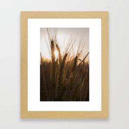 Wheat Holding the Sunset Framed Art Print