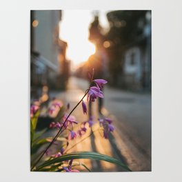 Sunset light Poster
