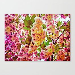 Polychrome Beauty In Full Bloom Canvas Print
