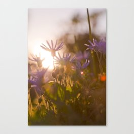 Sunset in the wilderness Canvas Print