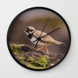 The little Ringed Plover Wall Clock