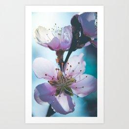 Peach Blossoms 11 Art Print