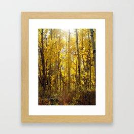 Golden Evening Framed Art Print