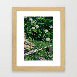 Wishing Flower Melody Framed Art Print