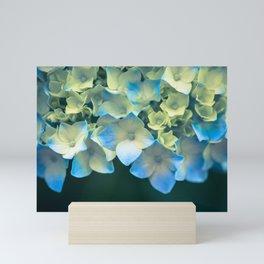Peek -A- Blue Mini Art Print