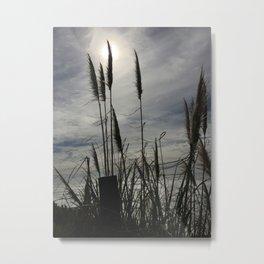 Coastal Feathers Metal Print