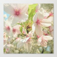 cherry blossom Canvas Prints featuring Cherry Blossom by Cassia Beck