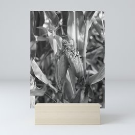 amorous corn, black and white photography Mini Art Print