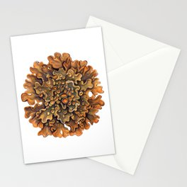 Maritime Sunburst Lichen Stationery Cards