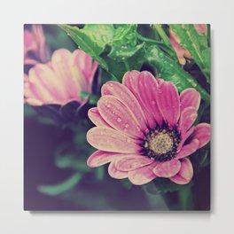 Thaw drops on flower Metal Print