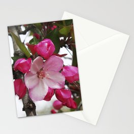 Spring blossoms - Strawberry Parfait Crabapple Stationery Cards