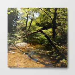 Muir Woods Impression Metal Print