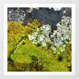 Tree Bark with Lichen#8 Art Print