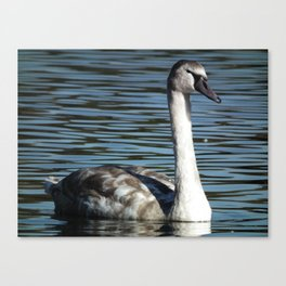 the signet Canvas Print