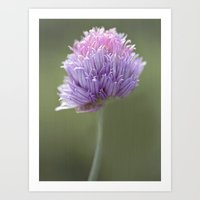 clover Art Prints featuring Clover by Fran Walding