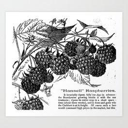 "'Hansell"" Raspberries 1886 Art Print"