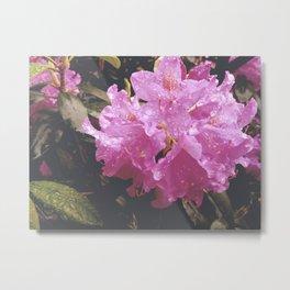 Vintage Pink Rhododendrons Metal Print