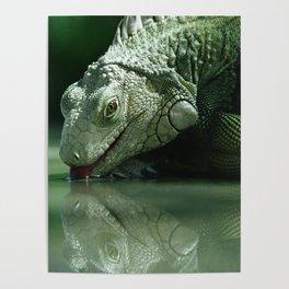 Drinking Iguana Poster