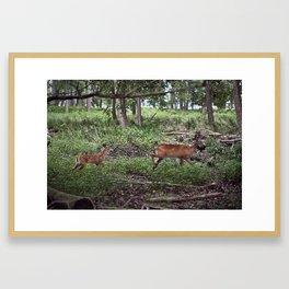 The Fawn Follows Framed Art Print