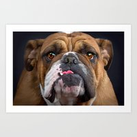 british Art Prints featuring British Bulldog by Best Light Images