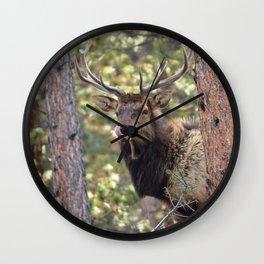 Rocky Mountain Elk Wall Clock