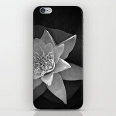 Nature star iPhone & iPod Skin