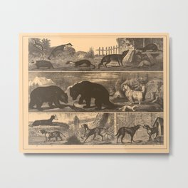 Iconographic Encyclopedia of Science, Literature and Art (1851) - Bears, dogs, badgers Metal Print