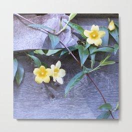 petite yellow flowers Metal Print