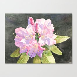 Pink Rhododendron Canvas Print