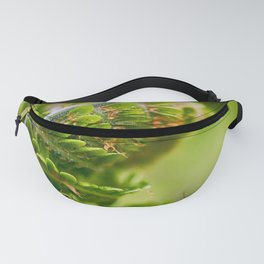 Young Fern Fanny Pack