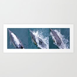 Dolphin collage Art Print