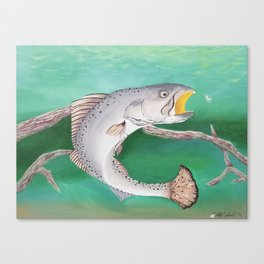 Take The Bait - Speckled Trout Canvas Print