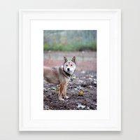 shiba inu Framed Art Prints featuring Shiba Inu by ohvictorho