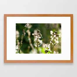 Roquette Flower Green & White Framed Art Print