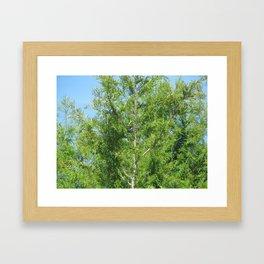 Everglades Eucalyptus Framed Art Print