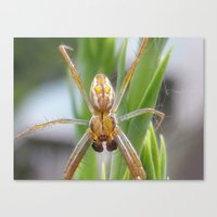 spider Canvas Prints featuring spider by Dottie