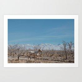 white horse Bolivia Art Print