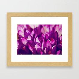Purple Spring Beauties Framed Art Print