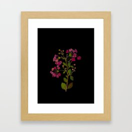 Lagerstroemia Indica Mary Delany Floral Flower Delicate Paper Collage Black Background Botanical Framed Art Print