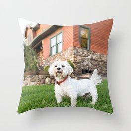 Max, M 8 y/o, Coton Tulear, Ardsley, NY Throw Pillow