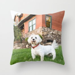 Max, M 8 y/o, Coton Tulear, Ardsley, NY Throw Pillow