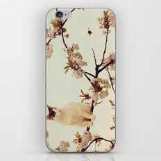 Cat in tree  iPhone & iPod Skin