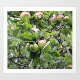 Apples on tree Art Print