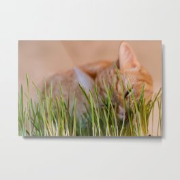 Ginger Cat Eating Green Grass Metal Print