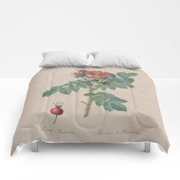 Rosa JP Redoute Comforters