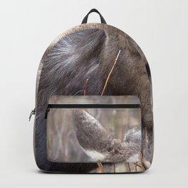 Watercolor Moose Cow 16, Wild Basin, RMNP, Colorado, Hehe.... Really? Backpack
