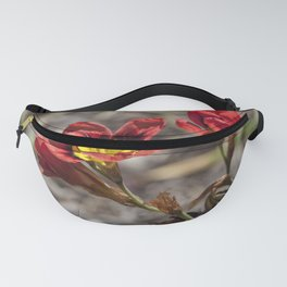 Sparaxis Fanny Pack