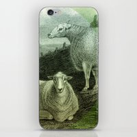 ass iPhone & iPod Skins featuring Sheep's Ass by Connie Goldman